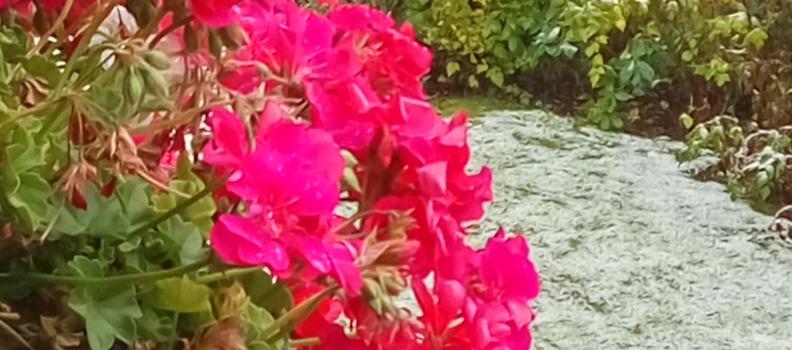 Unsere Blumen trotzen dem ersten Schnee